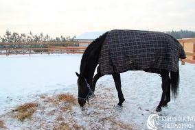 Лошадь на улице