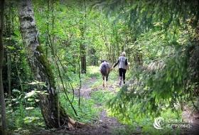 Густой хвойный лес