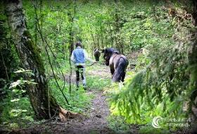Смешанный лес для прогулок